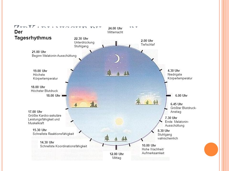 ZirKadianische rhythmen