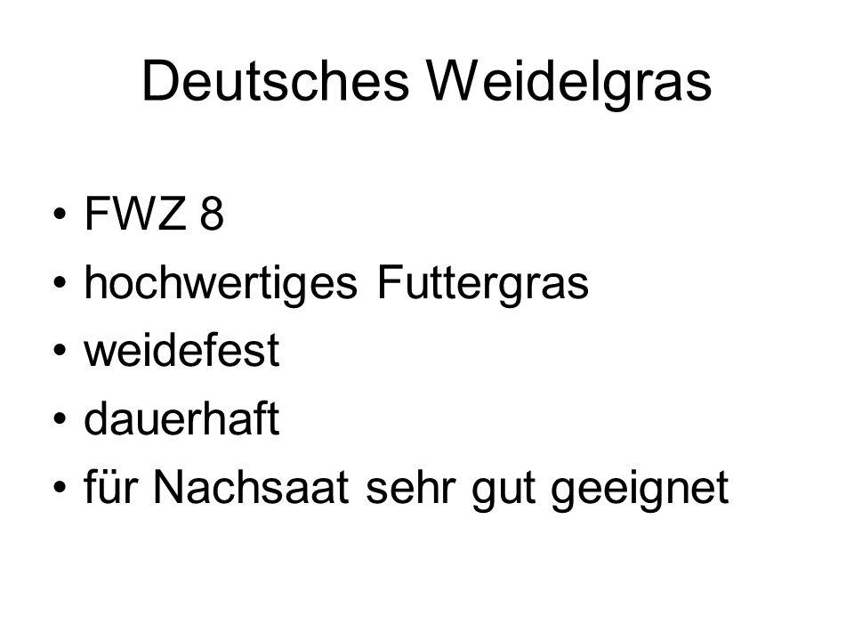Deutsches Weidelgras FWZ 8 hochwertiges Futtergras weidefest dauerhaft