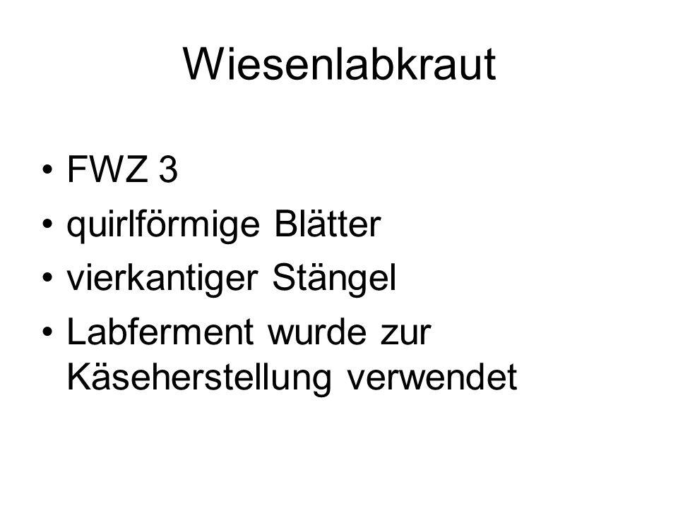 Wiesenlabkraut FWZ 3 quirlförmige Blätter vierkantiger Stängel