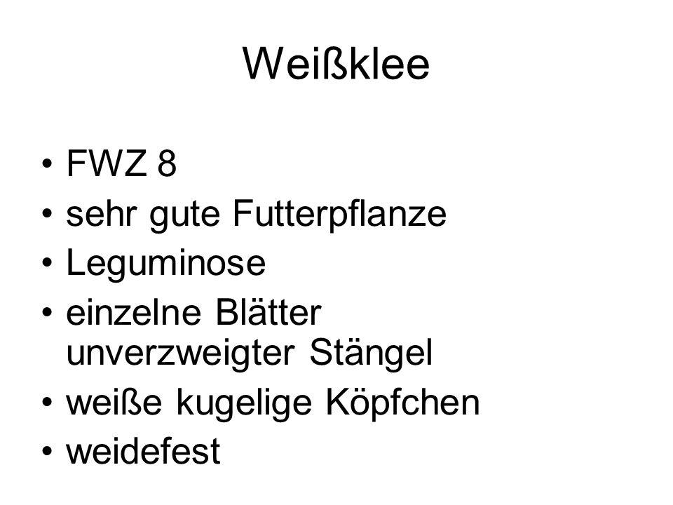 Weißklee FWZ 8 sehr gute Futterpflanze Leguminose