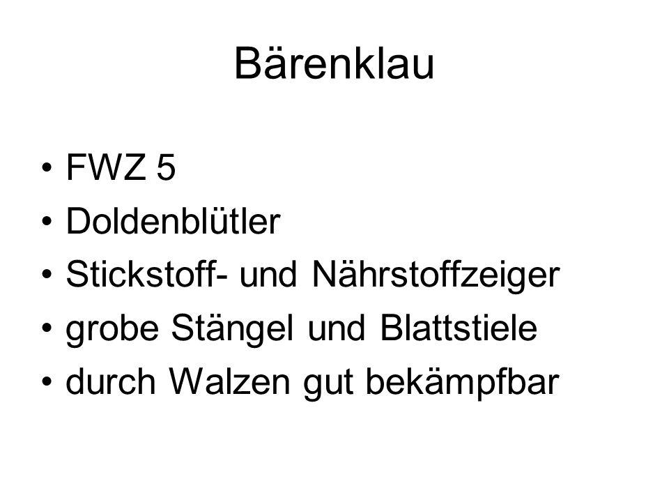 Bärenklau FWZ 5 Doldenblütler Stickstoff- und Nährstoffzeiger