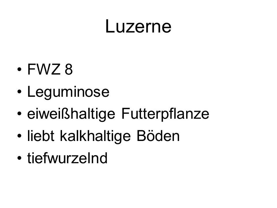 Luzerne FWZ 8 Leguminose eiweißhaltige Futterpflanze