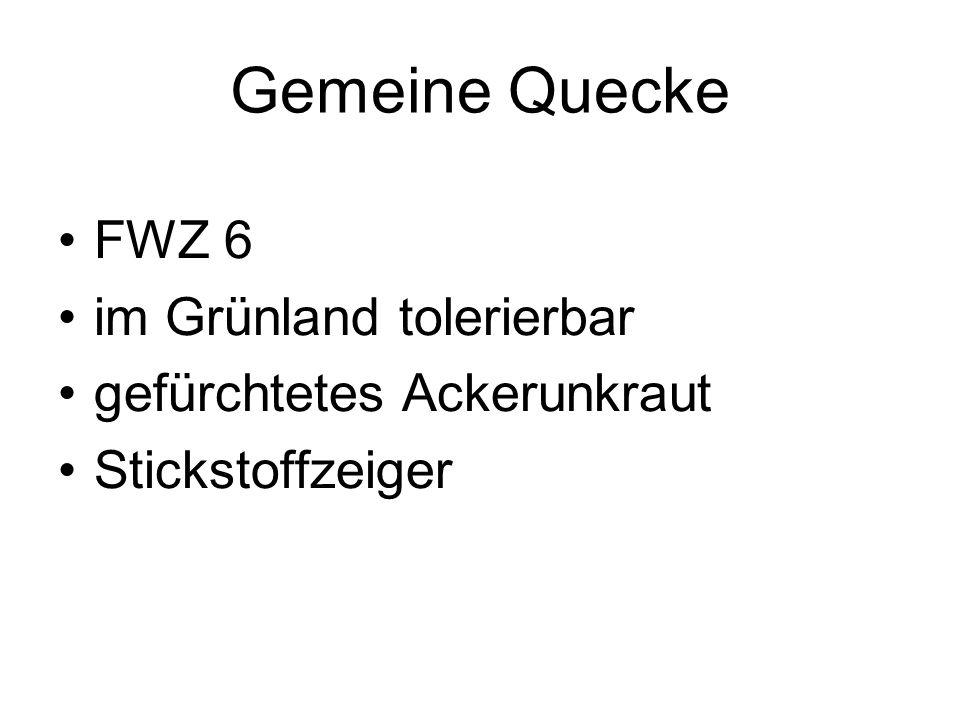 Gemeine Quecke FWZ 6 im Grünland tolerierbar gefürchtetes Ackerunkraut
