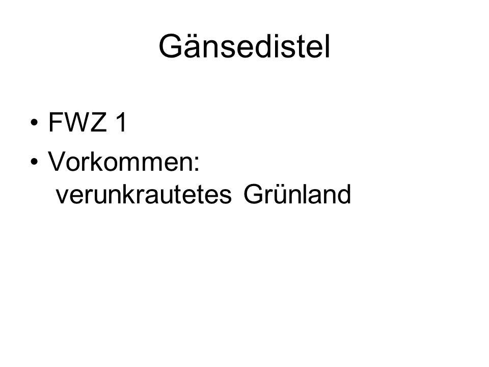 Gänsedistel FWZ 1 Vorkommen: verunkrautetes Grünland