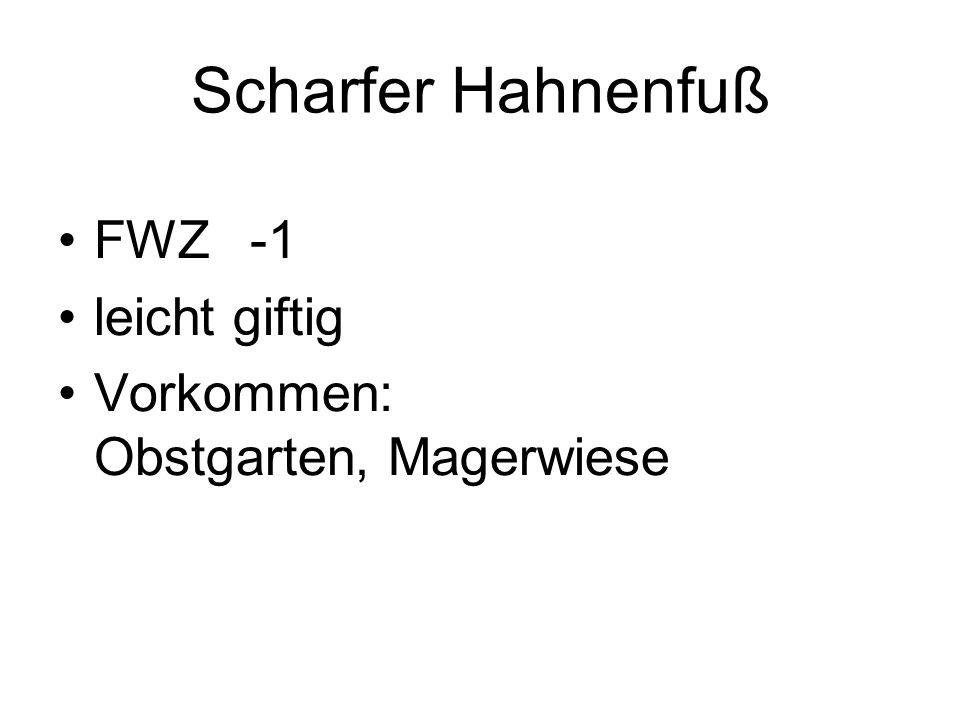 Scharfer Hahnenfuß FWZ -1 leicht giftig