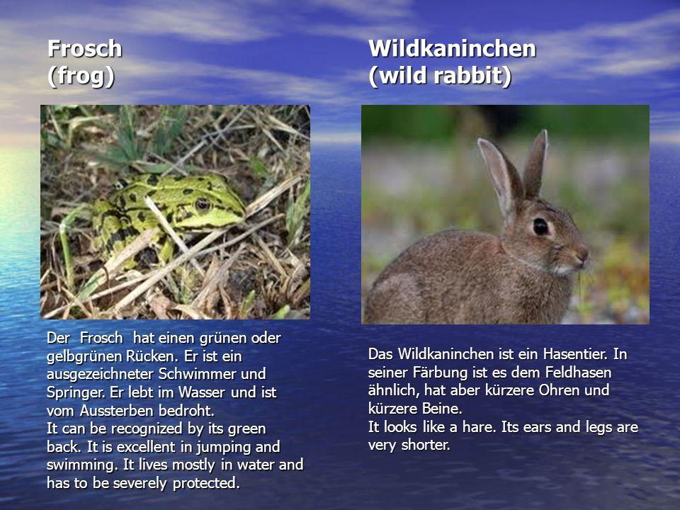 Frosch (frog) Wildkaninchen (wild rabbit)