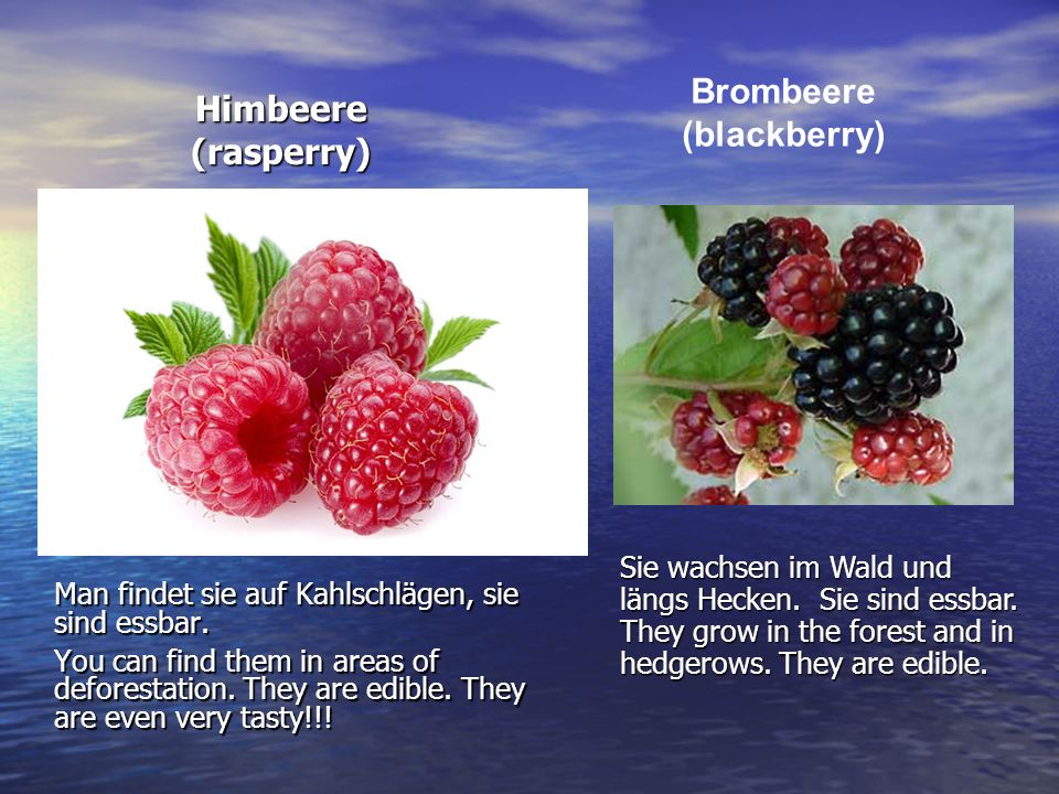 Brombeere (blackberry)
