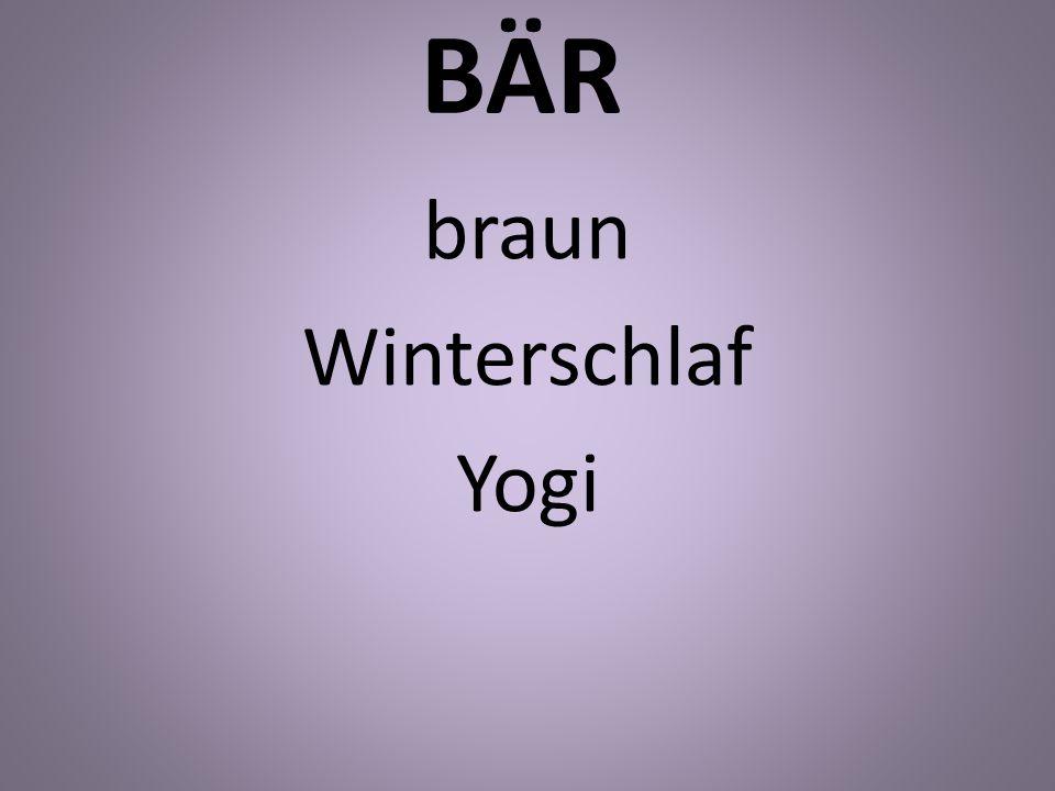 braun Winterschlaf Yogi
