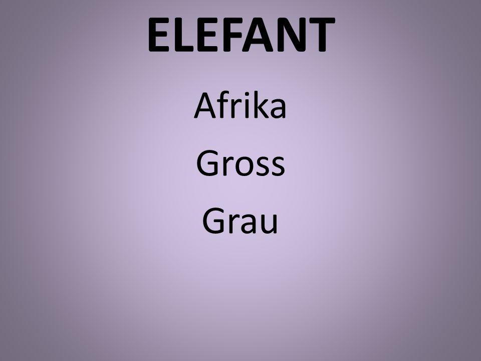 ELEFANT Afrika Gross Grau