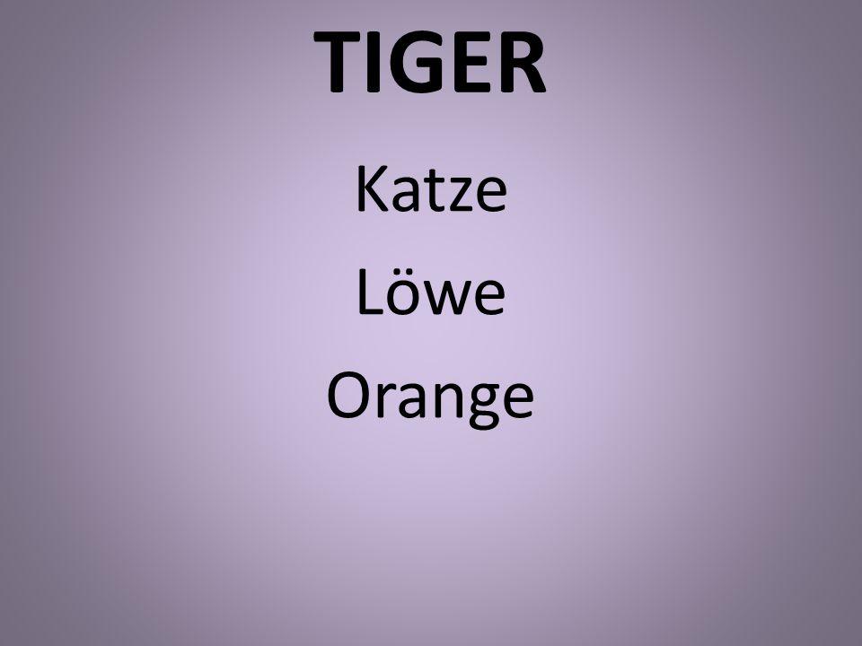 TIGER Katze Löwe Orange