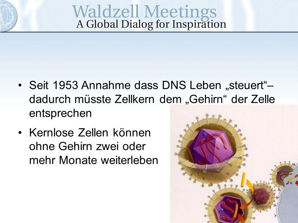 "Seit 1953 Annahme dass DNS Leben ""steuert –dadurch müsste Zellkern dem ""Gehirn der Zelle entsprechen"