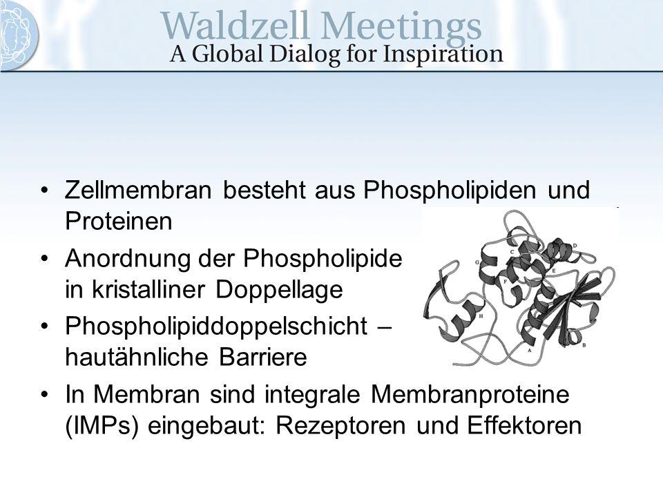 Zellmembran besteht aus Phospholipiden und Proteinen