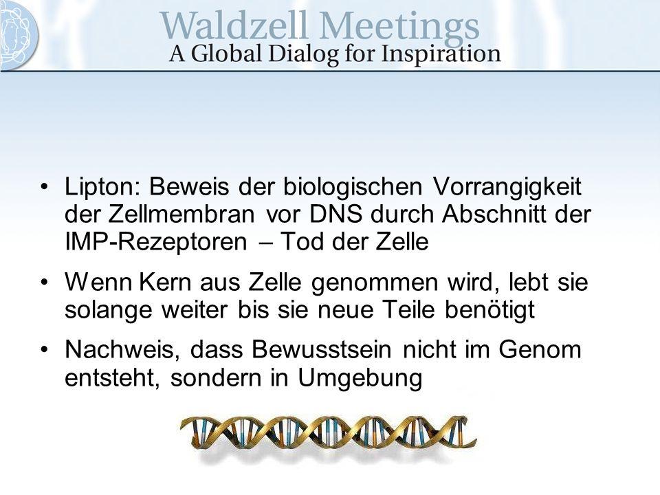 Lipton: Beweis der biologischen Vorrangigkeit der Zellmembran vor DNS durch Abschnitt der IMP-Rezeptoren – Tod der Zelle