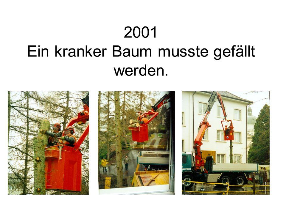 2001 Ein kranker Baum musste gefällt werden.