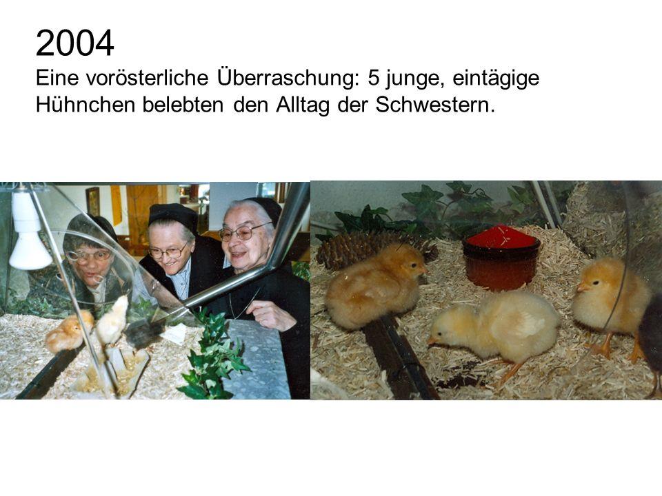 2004 Eine vorösterliche Überraschung: 5 junge, eintägige Hühnchen belebten den Alltag der Schwestern.