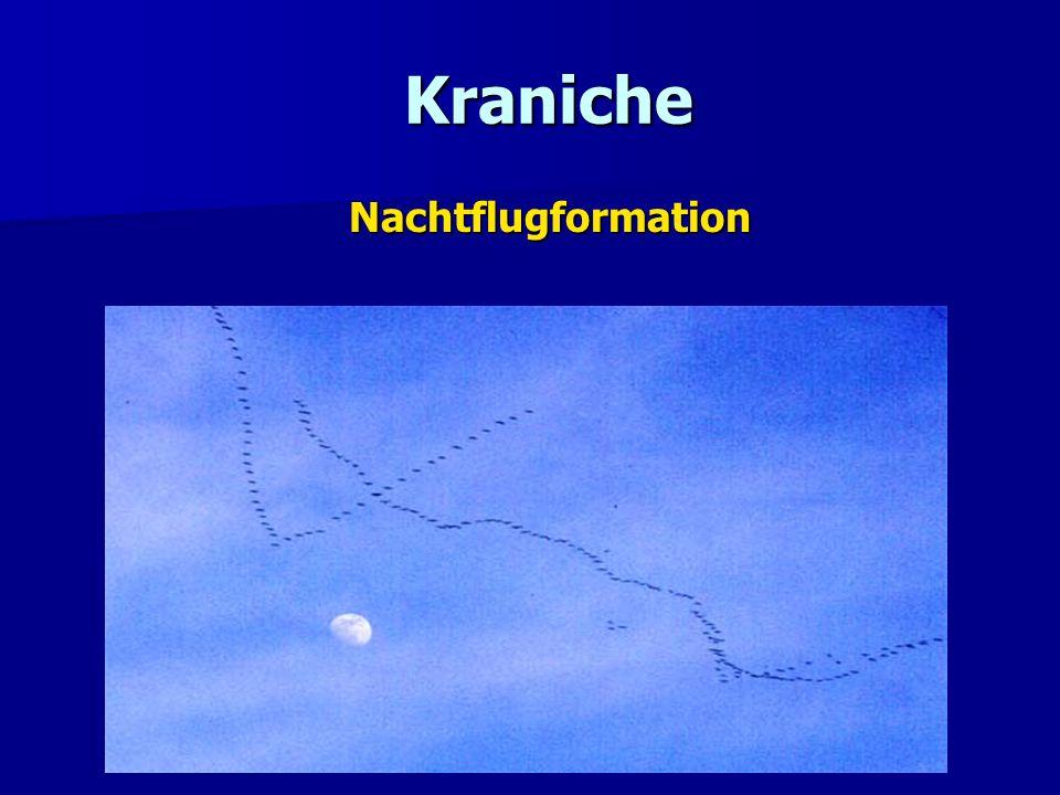 Kraniche Nachtflugformation