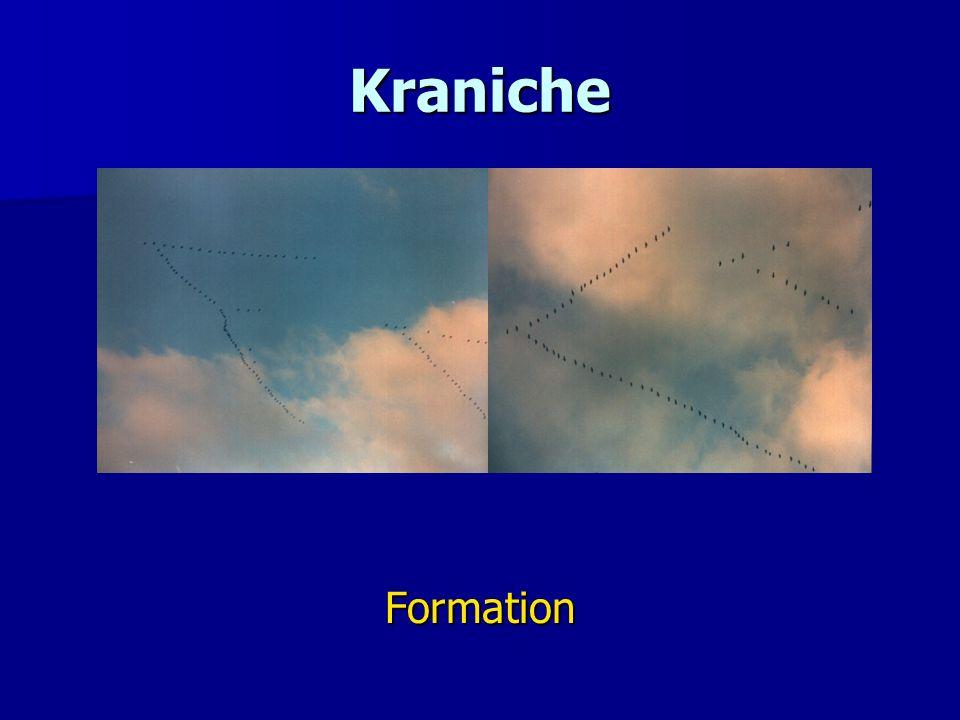 Kraniche Formation