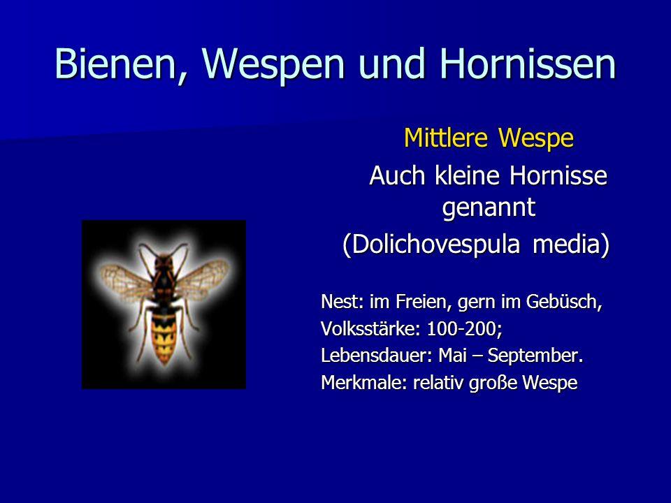 Bienen, Wespen und Hornissen