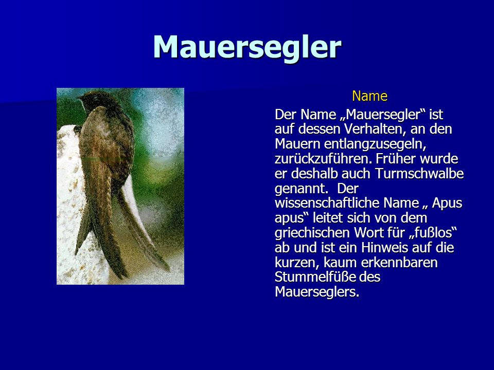 Mauersegler Name.