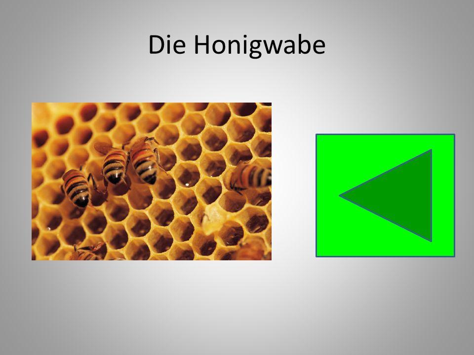 Die Honigwabe
