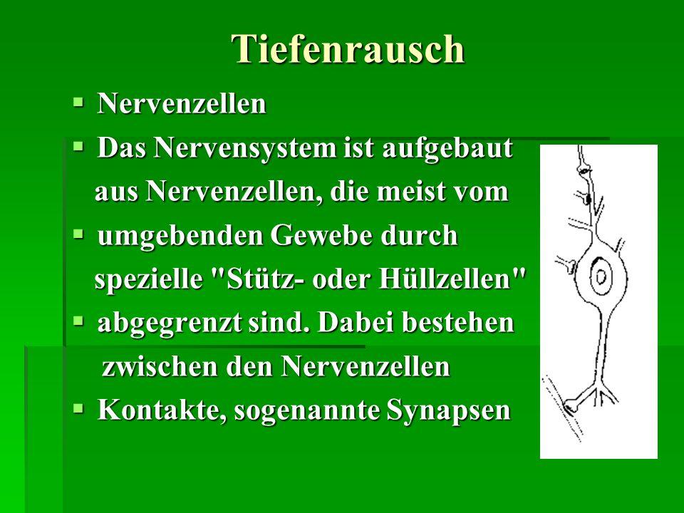 Tiefenrausch Nervenzellen Das Nervensystem ist aufgebaut