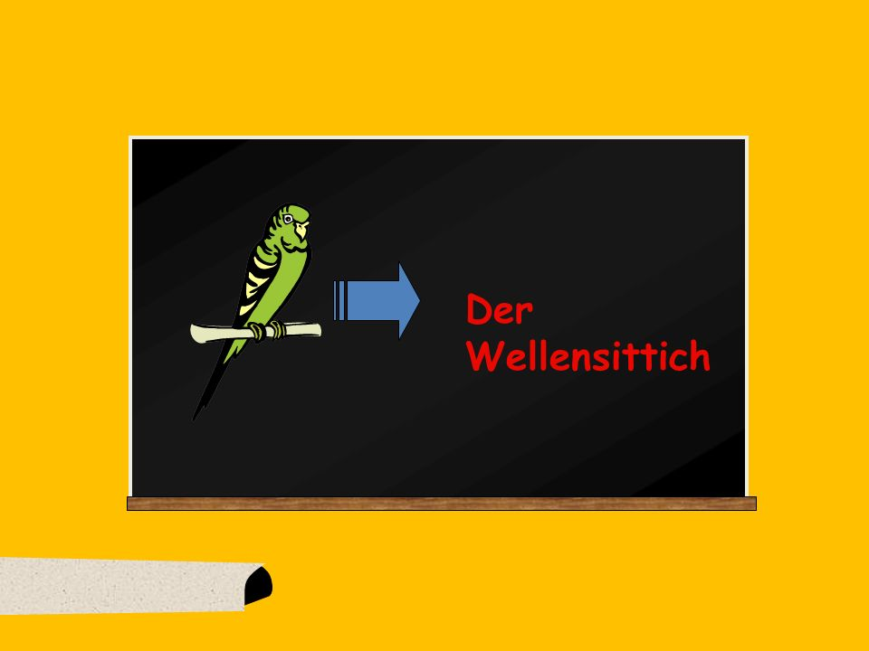 Der Wellensittich
