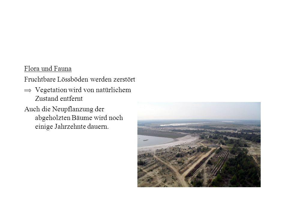 Flora und Fauna Fruchtbare Lössböden werden zerstört. Vegetation wird von natürlichem Zustand entfernt.