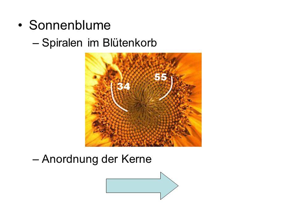 Sonnenblume Spiralen im Blütenkorb Anordnung der Kerne