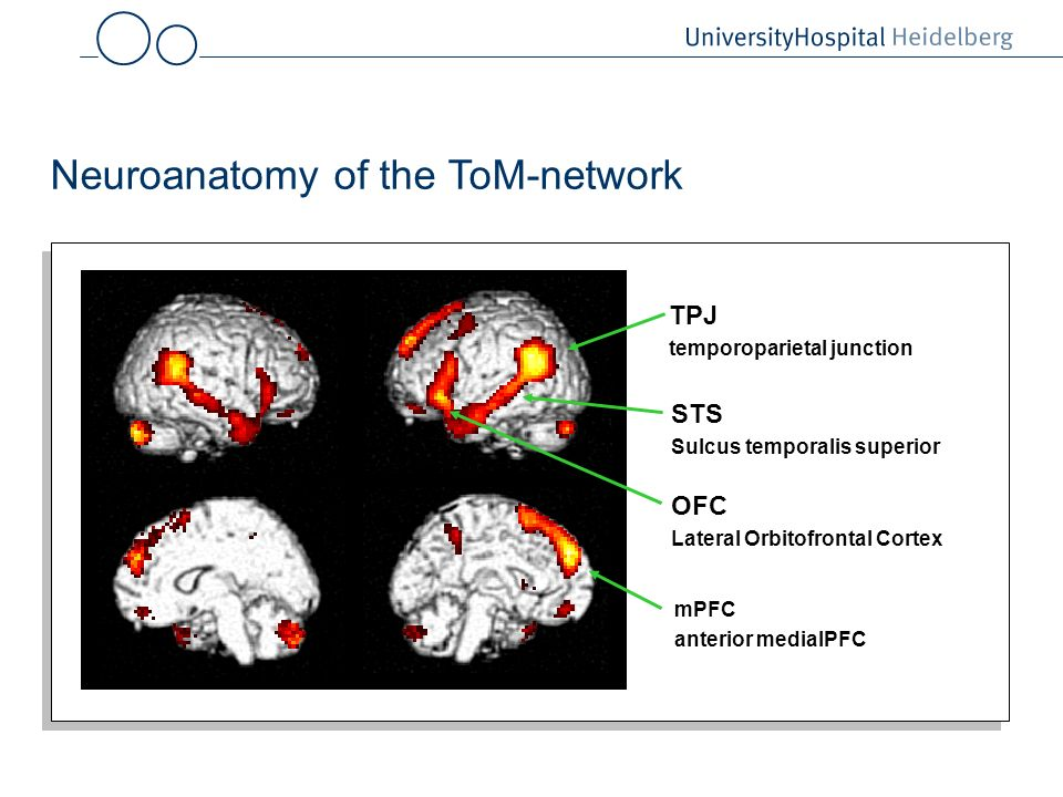 Neuroanatomy of the ToM-network