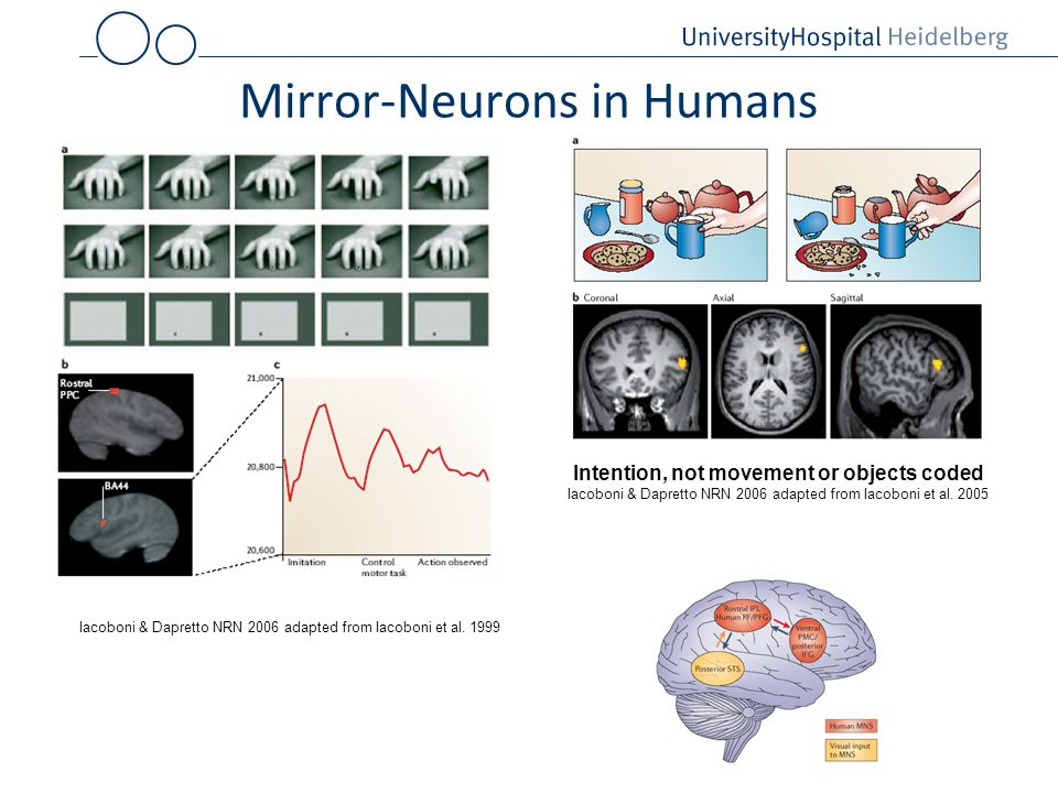 Mirror-Neurons in Humans