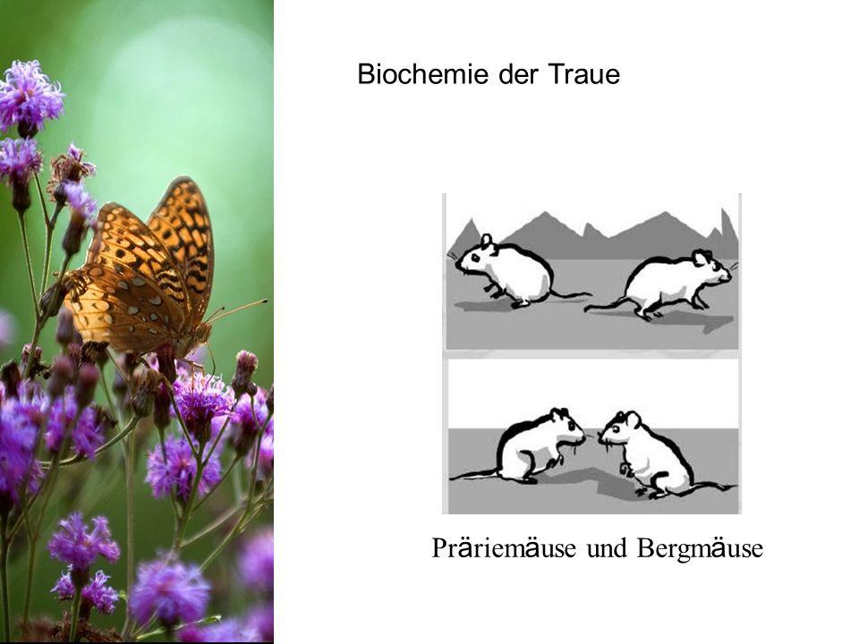 Biochemie der Traue Präriemäuse und Bergmäuse
