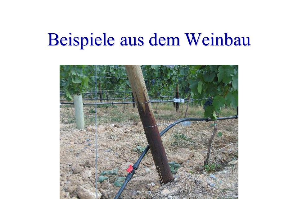Beispiele aus dem Weinbau