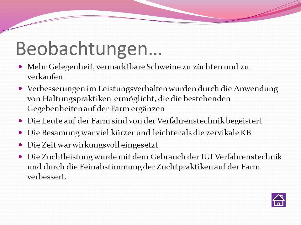 Beobachtungen…Mehr Gelegenheit, vermarktbare Schweine zu züchten und zu verkaufen.