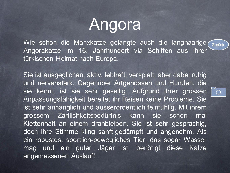 Angora Wie schon die Manxkatze gelangte auch die langhaarige Angorakatze im 16. Jahrhundert via Schiffen aus ihrer türkischen Heimat nach Europa.