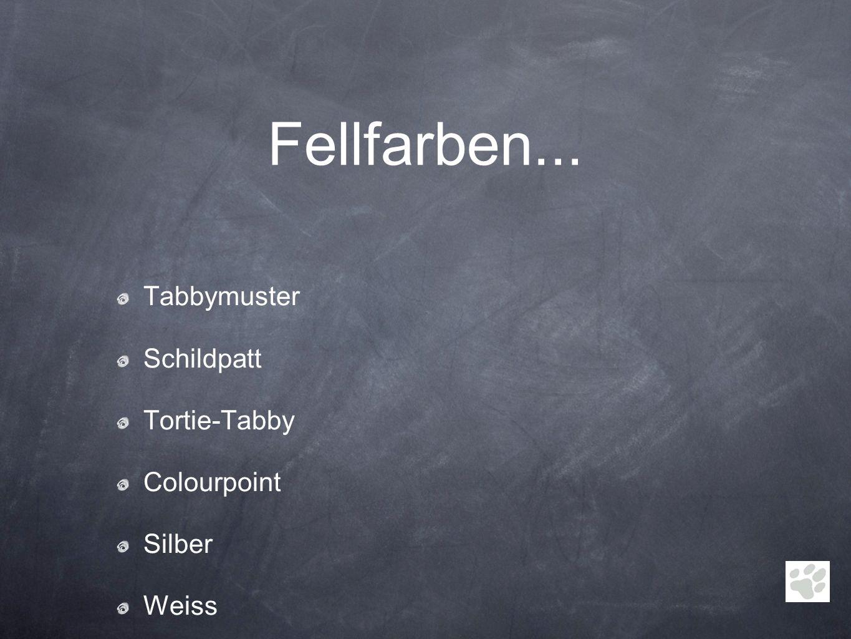 Fellfarben... Tabbymuster Schildpatt Tortie-Tabby Colourpoint Silber
