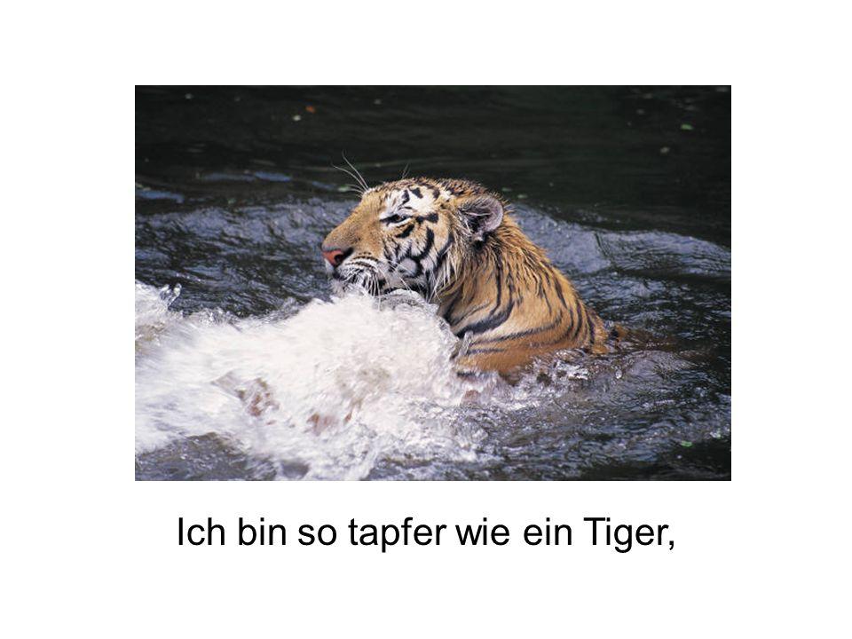 Ich bin so tapfer wie ein Tiger,