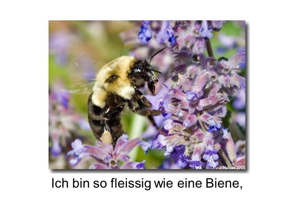 Ich bin so fleissig wie eine Biene,
