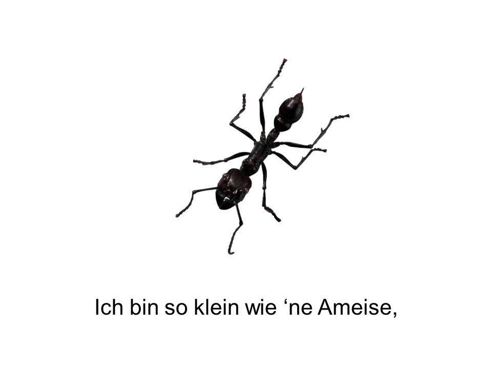 Ich bin so klein wie 'ne Ameise,