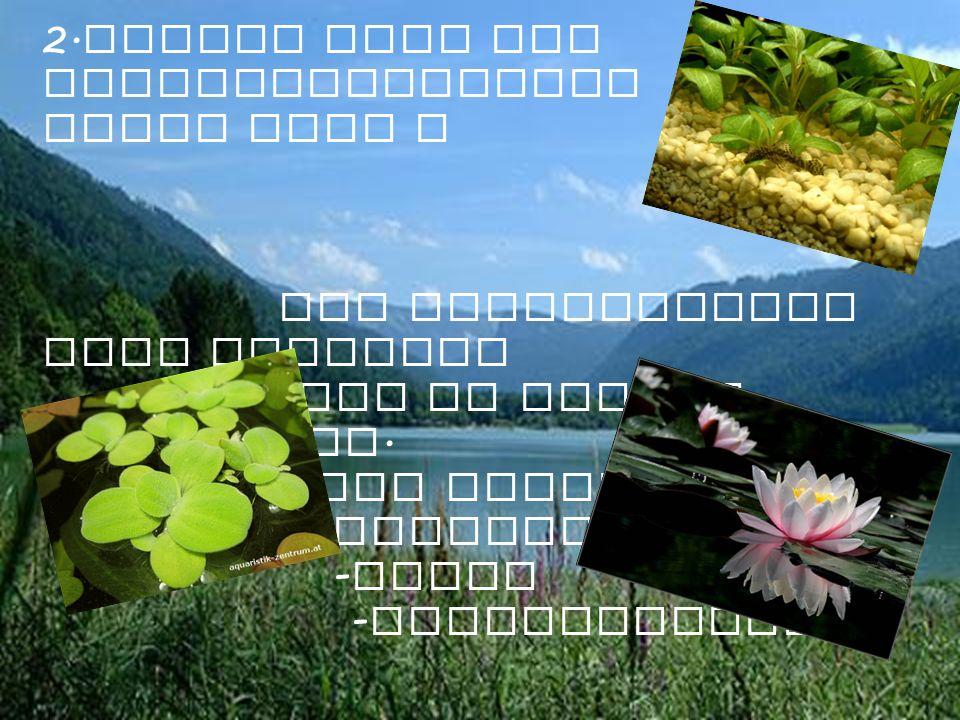 2.Welche sind die Vegetazionszonen