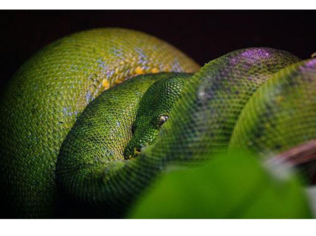 Und die Berta, unsere Schlange,