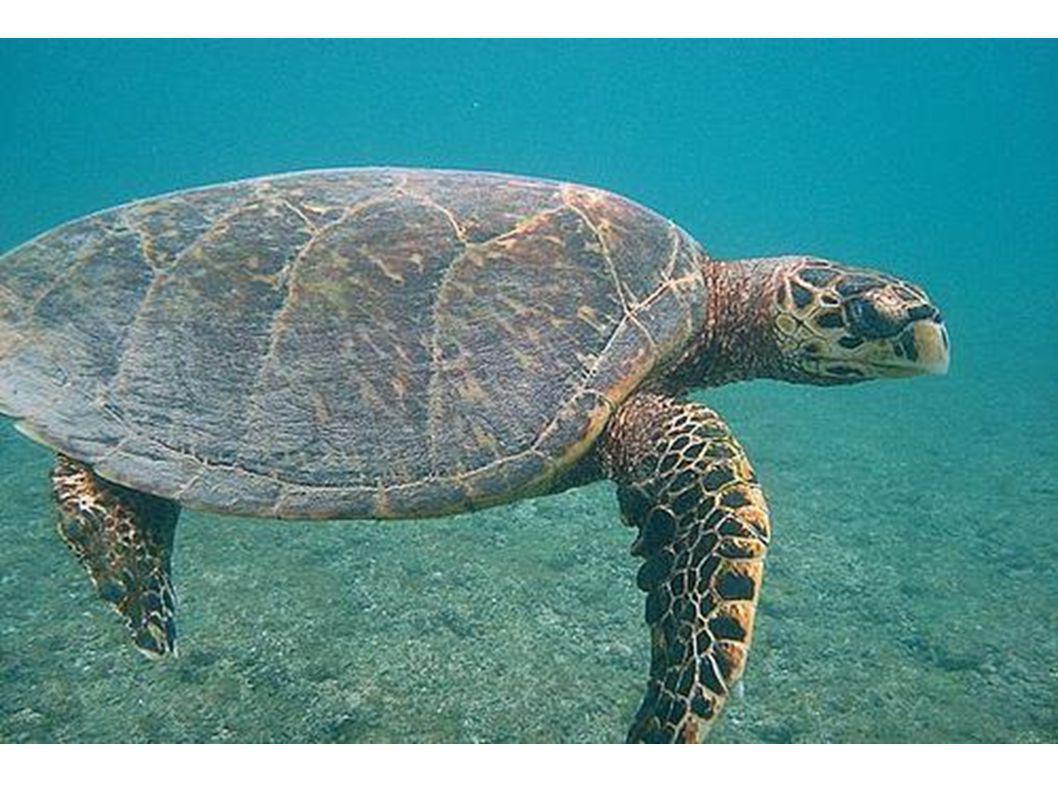 Und die Schildkröte heißt Paul.