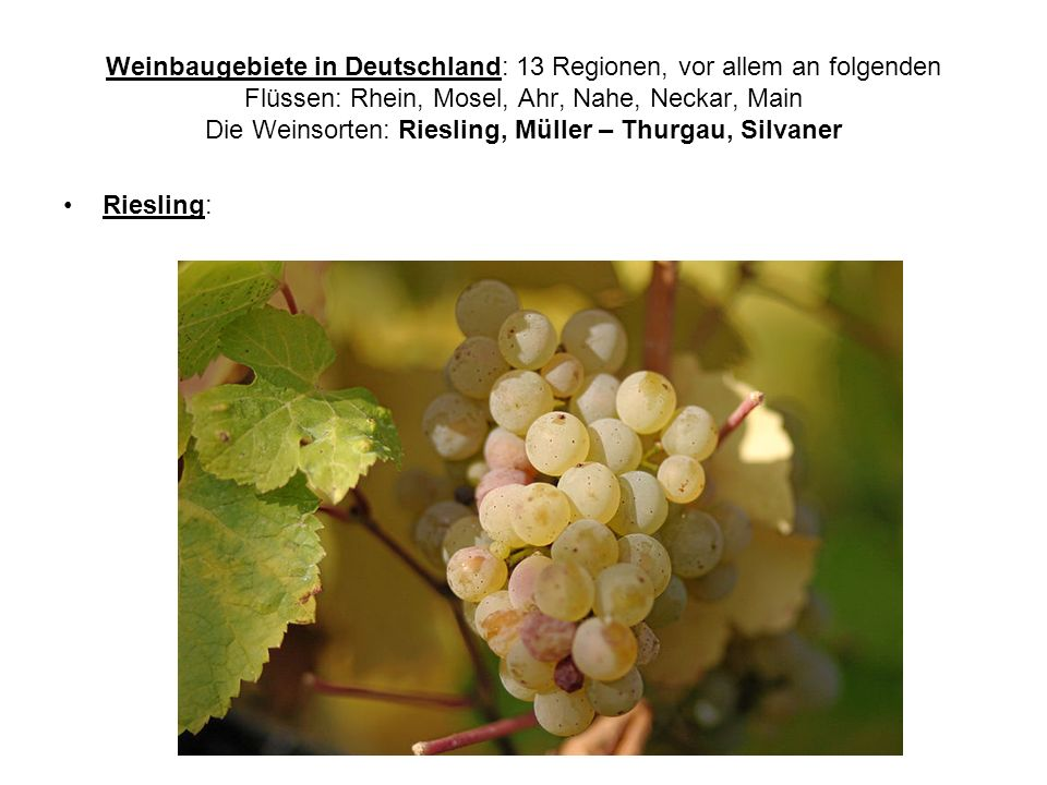 Weinbaugebiete in Deutschland: 13 Regionen, vor allem an folgenden Flüssen: Rhein, Mosel, Ahr, Nahe, Neckar, Main Die Weinsorten: Riesling, Müller – Thurgau, Silvaner