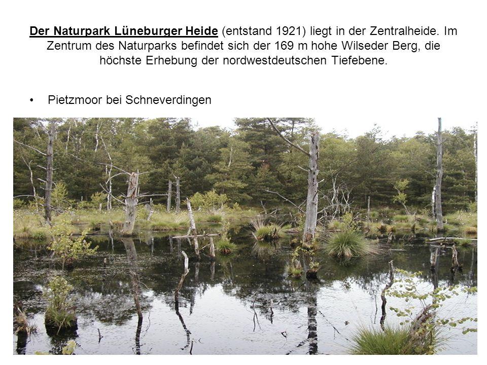 Der Naturpark Lüneburger Heide (entstand 1921) liegt in der Zentralheide. Im Zentrum des Naturparks befindet sich der 169 m hohe Wilseder Berg, die höchste Erhebung der nordwestdeutschen Tiefebene.
