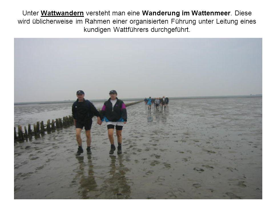 Unter Wattwandern versteht man eine Wanderung im Wattenmeer
