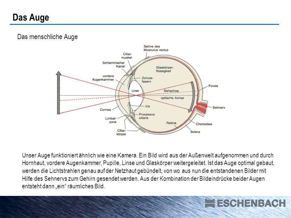 Das Auge Das menschliche Auge