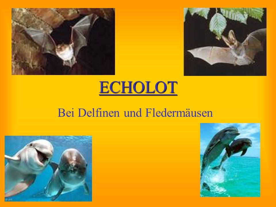 Bei Delfinen und Fledermäusen