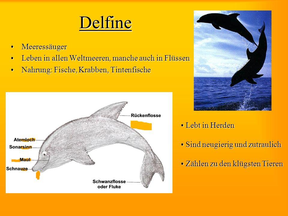 Delfine Meeressäuger Leben in allen Weltmeeren, manche auch in Flüssen