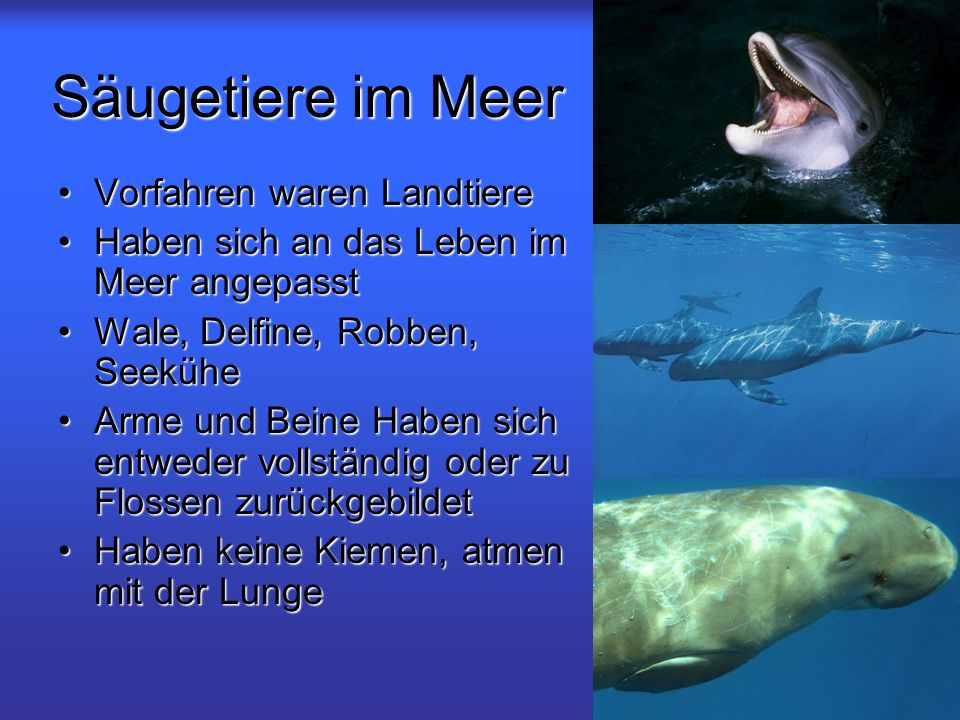 Säugetiere im Meer Vorfahren waren Landtiere