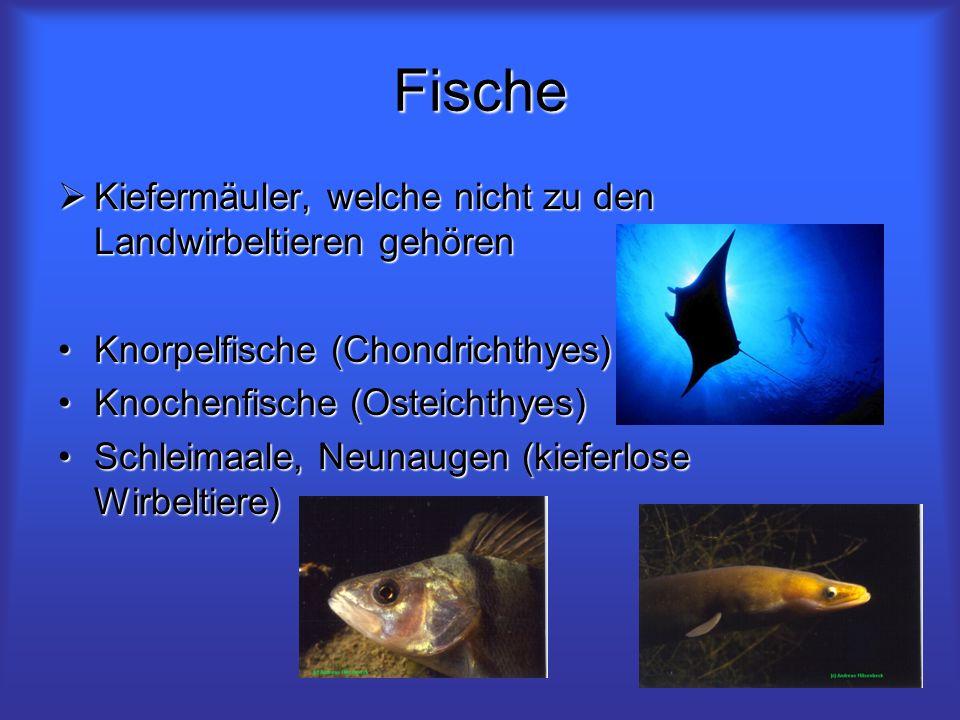 Fische Kiefermäuler, welche nicht zu den Landwirbeltieren gehören