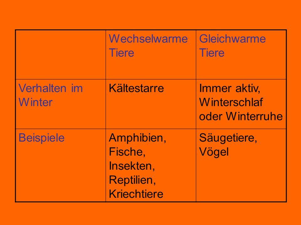 Wechselwarme Tiere Gleichwarme Tiere. Verhalten im Winter. Kältestarre. Immer aktiv, Winterschlaf oder Winterruhe.